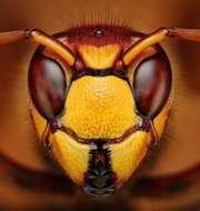 Пчелопакеты Карпатка (Мукачево),  Карника,  Бакфаст (Адыгея)
